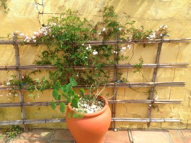 jasmine-terrace