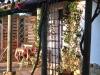 bedroom-terrace-separated-from-studio-terrace